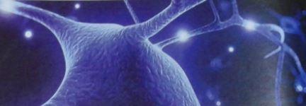 Plasticité cérebrale, connexion et relation